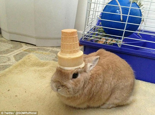 rabbit with cone